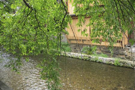 shirakawa: The fresh green of Shirakawa Gion Stock Photo