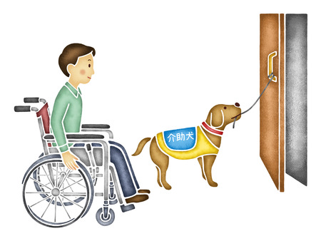 dog wheelchair: Service dog to open the door