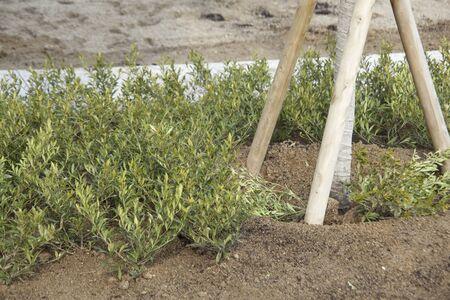 splint: Plantación plantas Parque