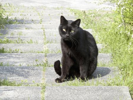 stray: Black stray cat
