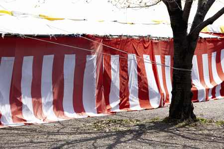 sows: Red and white curtain