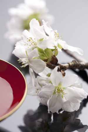 Sake Cup with cherry blossoms photo