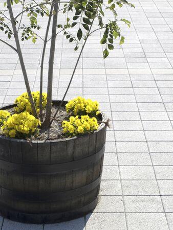 歩道に飾られた植物