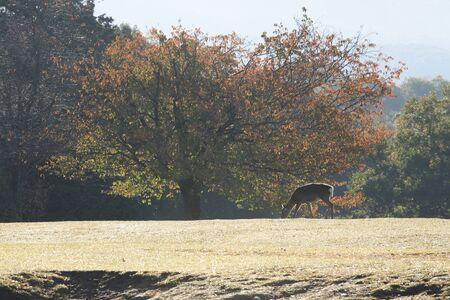 nara park: Fall of Nara Park