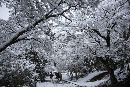 todaiji: Snow of Todaiji temple Stock Photo