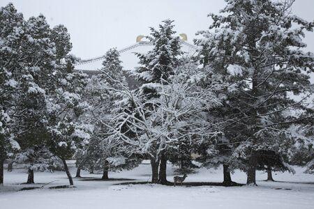 todaiji: Snow of Todaiji Temple auditorium trace