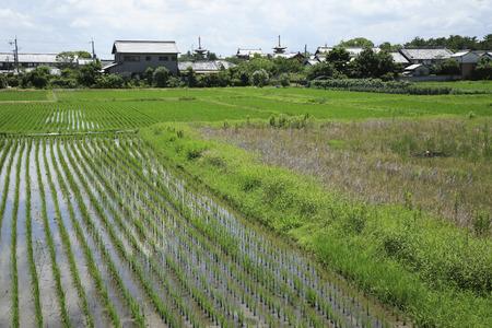 early summer: Early summer of Nishinokyo