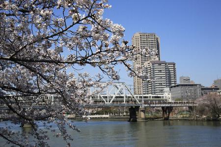 pętla: Sakura and the JR Osaka Loop Line