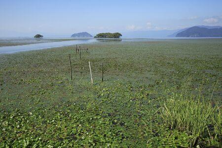 waterweed: Hydrocharitaceae of Lake Biwa