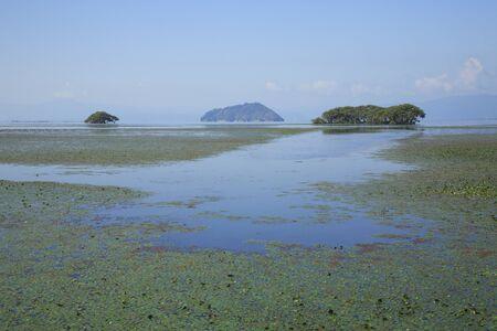 waterweed: Biwa Lake Lake North