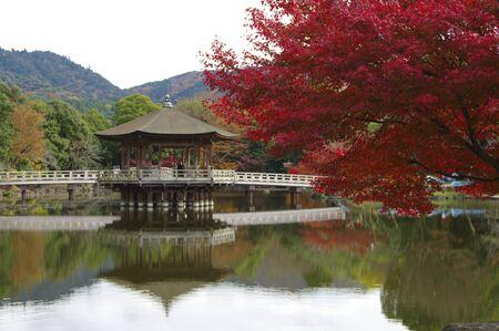 nara park: Autumn leaves of Nara Park Ukimido