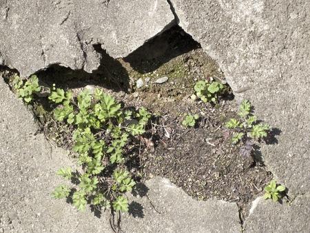 degradation: Cracked concrete Stock Photo