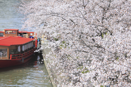 houseboat: Cherry trees and houseboat