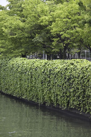 hygenic: Greening of the seawall