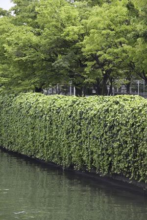 greening: Greening of the seawall