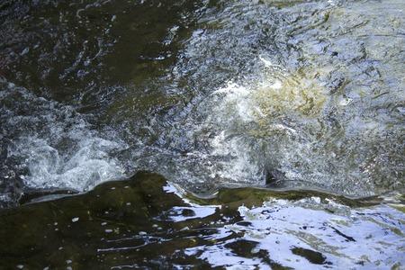 京都祇園白川