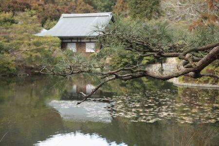 hojo: Ryoanji Temple KagamiHiroshi pond pine