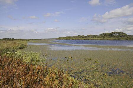 wetlands: Sarobetsu wetlands and swamp