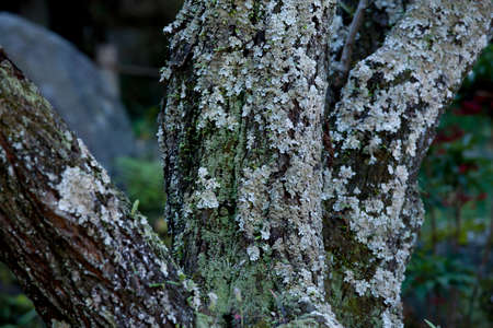 mossy: Plum mossy old Stock Photo