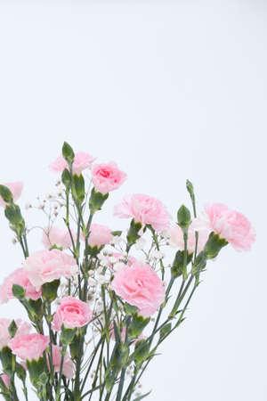 plural number: Carnation