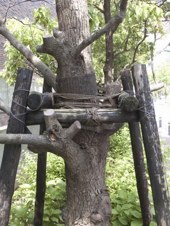 splint: Férula de árboles en las calles