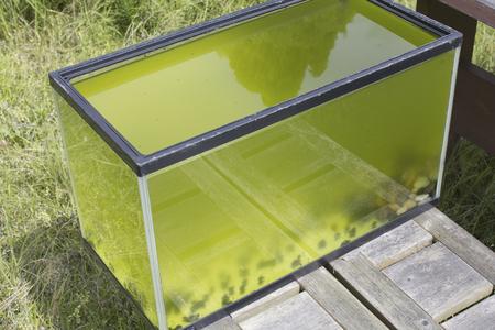 水槽に青緑色の藻 写真素材