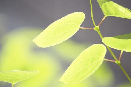 hygenic: Fresh green leaf Stock Photo