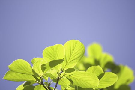 hygenic: Fresh green leaf Stock Photo