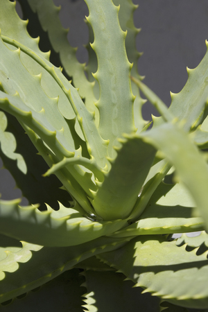 medicated: Aloe