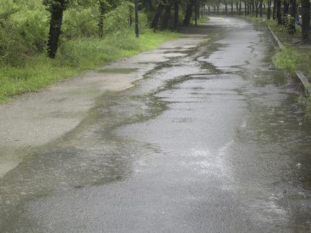 be wet: Puddle Park Trail