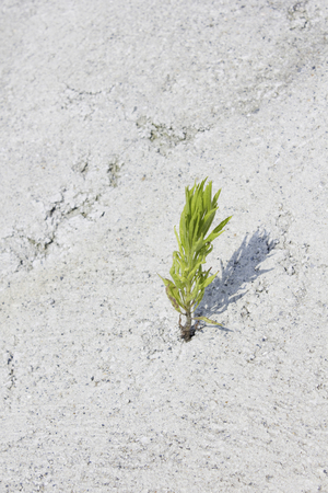 adversity: Weed grown from cracks in concrete Stock Photo