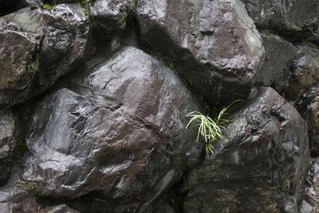the natural phenomena: Ishigaki it gets wet in the rain Stock Photo