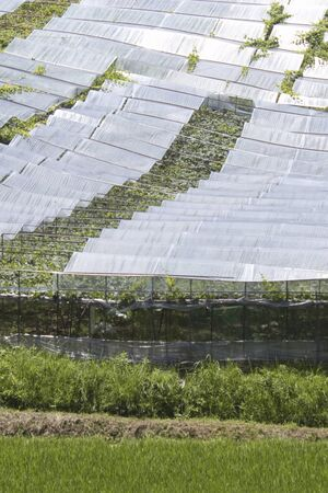 viticulture: Viticulture farm
