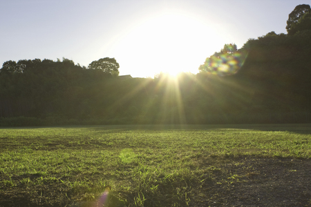 Dew of the grass that shines in the morning sun
