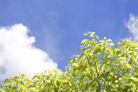 cielos azules: