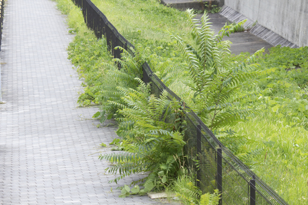 footway: Weeds that are carried over to the sidewalk
