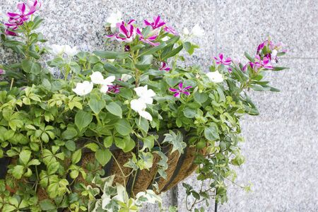 flower box: Flower box adorned the wall of the building flower Stock Photo