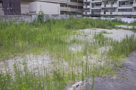 vacant land: Vacant land for redevelopment