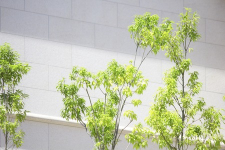 greening: Greening of the city Stock Photo