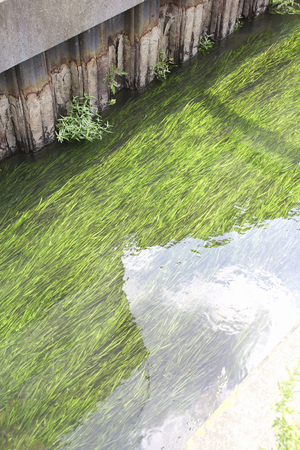 waterweed: Canal of clean water Stock Photo