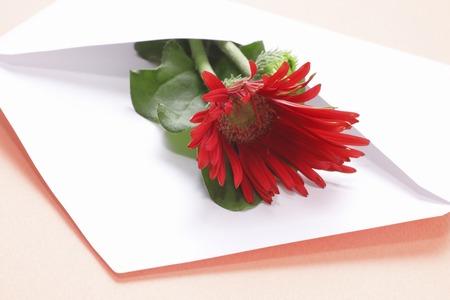 赤のガーベラの花は、白い封筒に置かれました。 写真素材