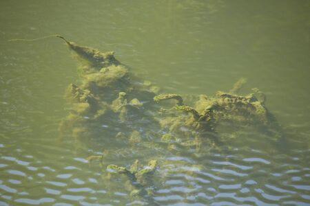 汚れた水の植物は水の池