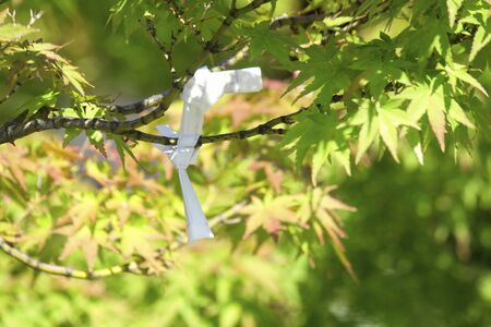 has been: Fortune that has been tied to the branches of the maple
