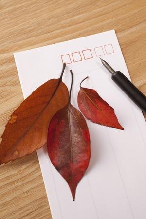 dead leaves: Dead leaves and envelopes and pen