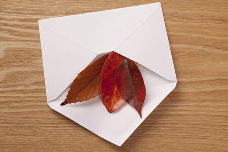 白封筒に紅葉します。