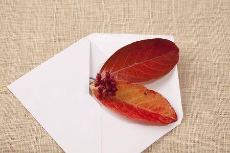 sobres de carta: Hojas de otoño en los sobres blancos