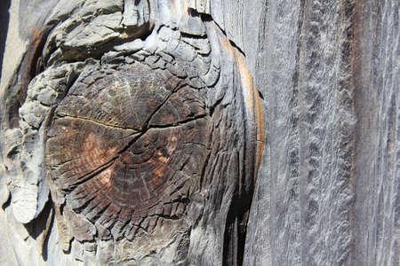 milestone: Milestone of the leaf of the tree