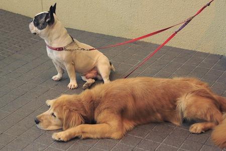 犬つなぎ縄でつながれたペット