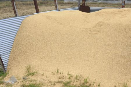 chaff: Rice hulls that are piled up in a rice field