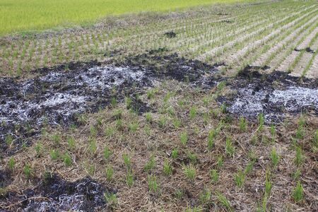 tire marks: Tire marks of the rice field of cultivator